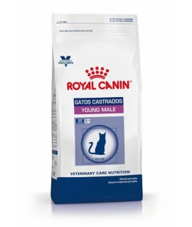 Royal Canin Young Male