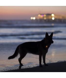 Coastal Luz para collar